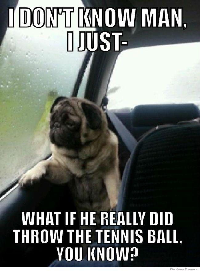 dog worrying